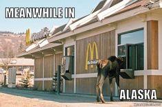 Homer Alaska McDonald's visitor
