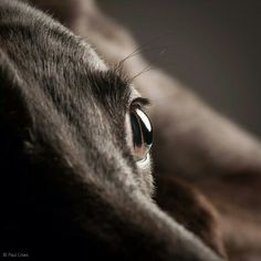 there is no mistaking the shape of a greyhound