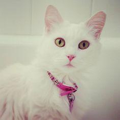 A fluffy kitty Kat!