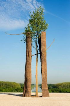 exhibition by Italian artist Giuseppe Penone at France's iconic Château de Versailles