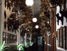 Franz Ferdinand's hall of antlers. Konopiste Castle. Source: Prague, My Love.