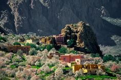 Almond blossom flourishes in Morocco's Ameln Valley