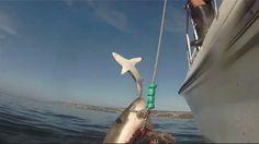 Ce requin sait comment voler la vedette!