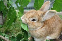 Zweige und Äste als Kaninchenfutter