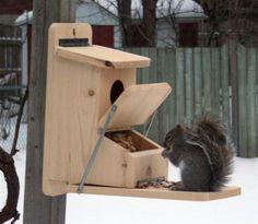Squirrel feeder plans