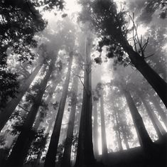 Reminded me of the #HungerGames Arena in #CatchingFire (Michael Kenna Photography)