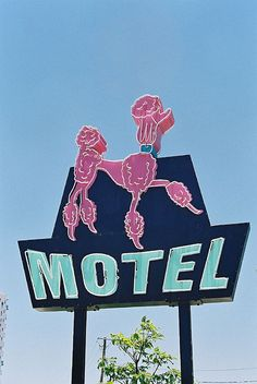 Pink Poodle Motel vintage neon sign - This is in Australia.  Hopefully it is dog-friendly and still exists!