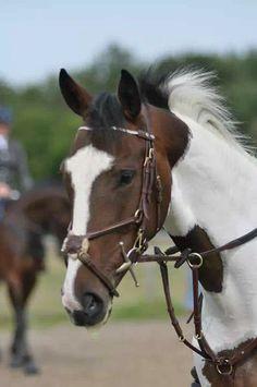 love the irish sport horses!