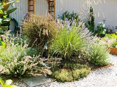 WSHG.NET | Cultivate Your Child's Love for Gardening | Featured, For The Garden | August 6, 2014 | WestSound Home & Garden