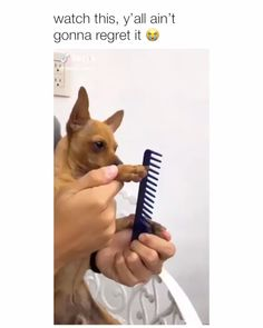 Watch this, y'all ain't gonna regret it Read More: 20 Funny Dog Memes That Will Have You in Stitches Funny Dog Memes, Funny Video Memes, Funny Animal Memes, Cute Funny Animals, Funny Animal Pictures, Cute Baby Animals, Funny Cute, Funny Dogs, Funny Videos