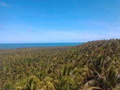 Fazenda de Coqueiros do Gunga - AL