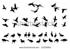 Illustration of collection of mallard duck silhouettes for designers vector art, clipart and stock vectors. Duck Hunting Tattoos, Duck Tattoos, Baby Tattoos, Duck Silhouette, Silhouette Tattoos, Canard Colvert, Duck Logo, Bird Logos, Country Art
