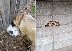 10+ Desperate Dogs Who Just Want To Say Hi