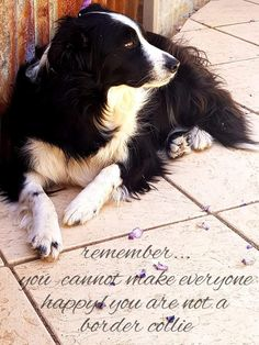 Such a beauty Border Collie Humor, Animals Beautiful, Cute Animals, English Shepherd, Collie Mix, Dogs And Puppies, Doggies, Dog Signs, I Love Dogs