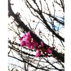 Hoy no hay prisa. Hoy sueño con risas. Feliz viernes!  #vacaciones #vacances #vacation #acozyspring #almendro #flowers #naturelovers #nature #slowlife #slowlifestyle #moments #slow #inspiration #instagramers #instabarcelona #instabcn #spring2016 #primavera #primerolacomunidad #communityfirst #inspiracion #parc #parcguinardo by doceramica