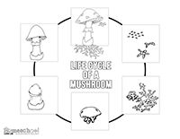 Click on Images to download a larger image. Right Click and Save to your Computer. Terms of Use Free Mushroom Life Cycle clipart featuring hand drawn illustrations for teachers and educators.