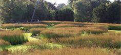 Rivers of Grass at Trentham Gardens. Molinia caerulea 'Edith Dudzuz' and Molinia caerulea 'Heidebraut'