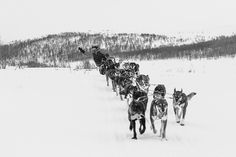 Dag Torulf Olsen is now training for the Iditarod-run, Alaska Olsen, Alaska, Norway, Training, Pictures, Outdoor, Photos, Outdoors, Work Outs