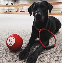 Can you remember the last time you #barred all excuses? Take a note from #Mary's book and step in the right direction with Pure Barre SouthPark. #lift #tone #burn #SpecialtyShopsSouthPark #CLT