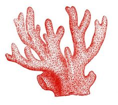 Antique Images - Coral Specimens - Red and Black - The Graphics Fairy