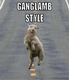 ganglamb style!