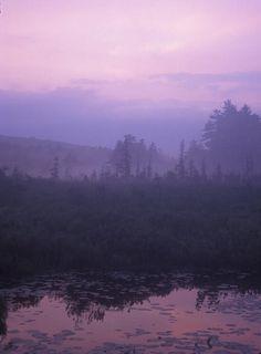 ✯ Tom Swamp Evening Light - MA
