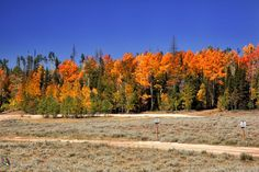 Autumn trees by Paul Nagels on 500px