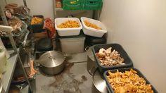 Lieferung: 17 kg Eierschwammerl und 2,5 kg Steinpilze Porcini Mushrooms, Summer
