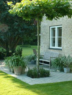 Basic garden design tips Outdoor Spaces, Outdoor Living, Travel Photography Tumblr, Lush, Low Maintenance Garden, Exterior, Small Plants, Terra Cotta, Garden Projects