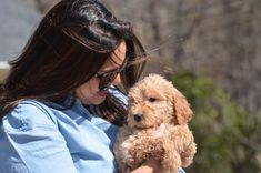 Locations Centered in Greenville, SC, Crockett Doodles now has alternate pick up locations in several U. Goldendoodle Breeders, Havanese Grooming, Havanese Dogs, Maltipoo, Labradoodle Puppies For Sale, Cute Puppies, Havanese Haircuts, Christian Camp, Cute Funny Dogs