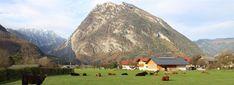 nahgenuss: Bio Fleisch vom Schottischen Hochlandrind bei Familie Lanner bestellen. | Golling, Salzburg. Salzburg, Golf Courses, Blog, Free Range, Blogging