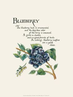 Blueberry - G. Phillips Posters