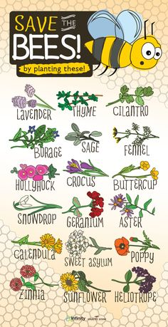Bees are responsible for most of pollination and they are becoming scarce. Help save the bees by planting these flowers.