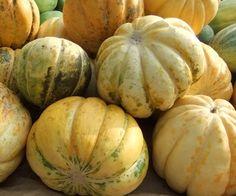 blewah [Indonesia] > Cucumis Melo L. [Latin] blewah similiar with melon. Tastes fresh and sweet