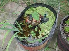Mini Turtle Pond. Love the chicken wire. Keeps other critters out and the turtles in. Lol