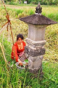 Daily worship in Ubud farmer's shrine