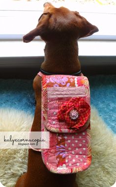 Baxter's mom has added another beautiful item to her repertoire! a doxie backpack...