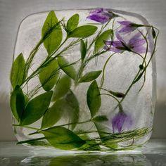 fleurs congelées