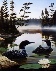 Leo Stans Boundary Waters- Loon