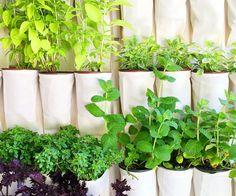 Vertical Herbs