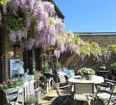 All Things Shabby and Beautiful: Photo Outdoor Living, Outdoor Decor, Wisteria, Fairy Lights, All Things, Shabby Chic, Exterior, Flowers, Plants