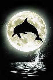 """Résultat de recherche d'images pour """"dauphin qui saute"""""""
