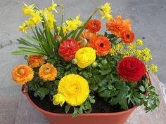 You can do it! April flower inspiraion.