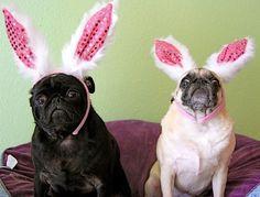 Easter Pugs - Costumepedia.