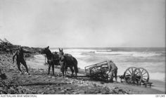 Gallipoli Peninsula, Turkey. 17 November 1915. During a storm, which came up from the south-west, the Indian mule carts, which were kept along the beach, were partially buried. The Turks, knowing that we must be busy clearing things up, kept up an incessant fire with 'Beachy Bill', one of their big guns.