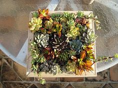 mixed succulents with wood frame
