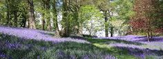 Image result for english country gardens
