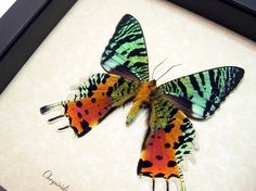 I want soooooo many of these. From Realbutterflygifts on Etsy.  Update: I now have four many of these. They are as colorful and fantastic as they look.