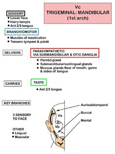 Instant Anatomy - Head and Neck - Nerves - Cranial - Vc (Trigeminal - mandibular division)