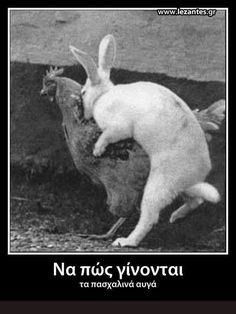 So this rabbit and hen go into a bar. Just For Fun, Just For Laughs, Funny Images, Funny Photos, Greek Memes, Made Goods, Kangaroo, Easter Eggs, Laughter